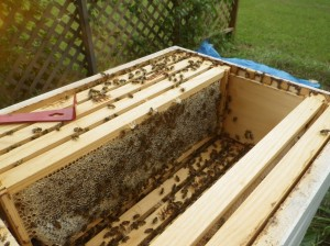 Beehive super