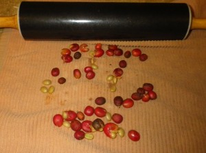 bean roll