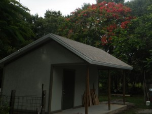 shed poinciana